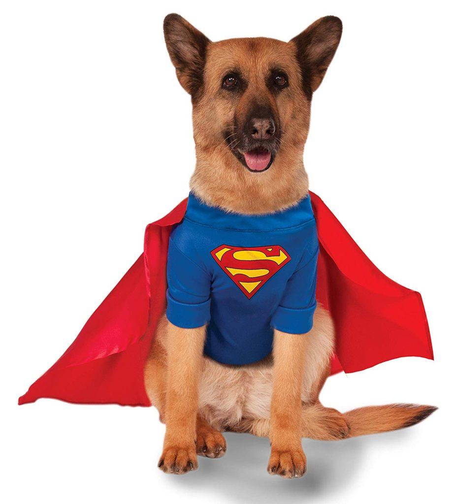 40 Halloween Costumes For Dogs Dog Friendly San Antonio