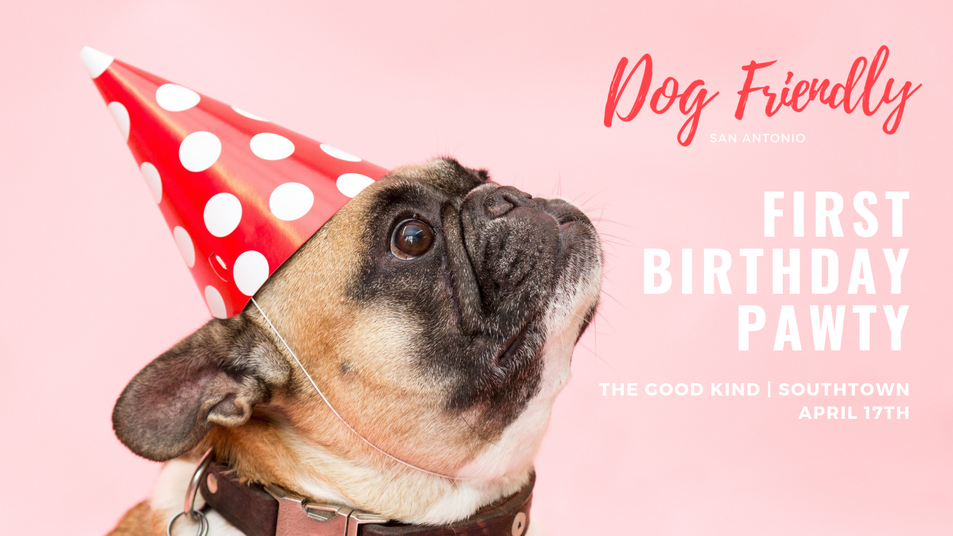 Dog Friendly San Antonio Birthday Party