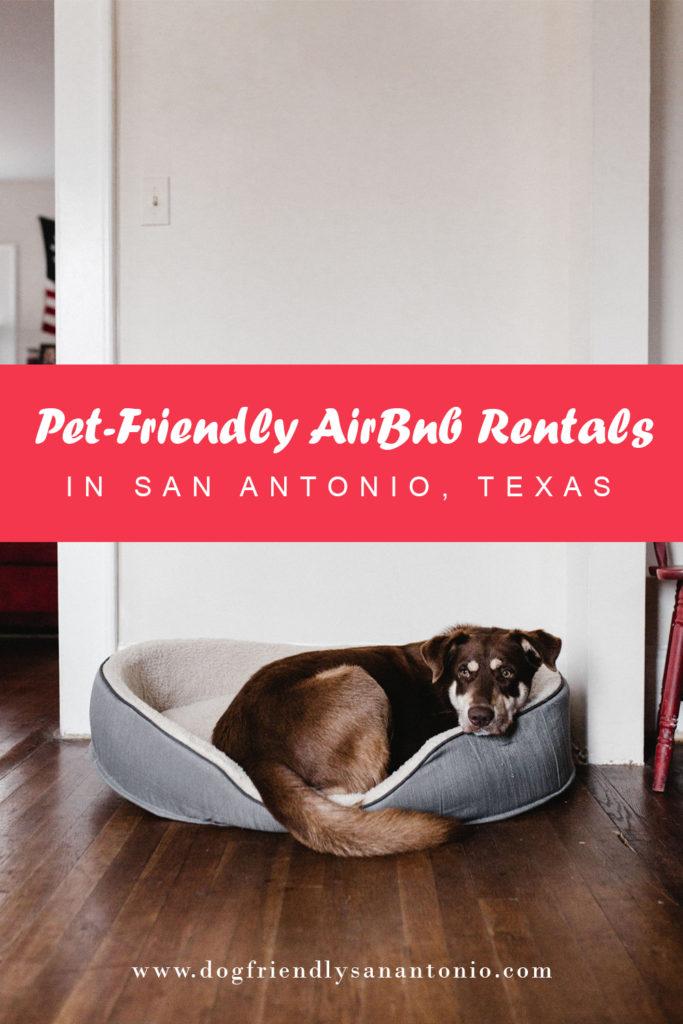 San Antonio Christmas 2020 Pet Friendly Events Pet Friendly AirBnb Rentals in San Antonio, Texas   Dog Friendly